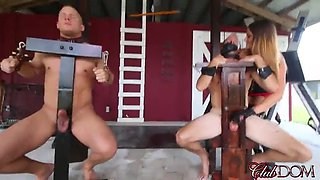Cocks pilloried and abused